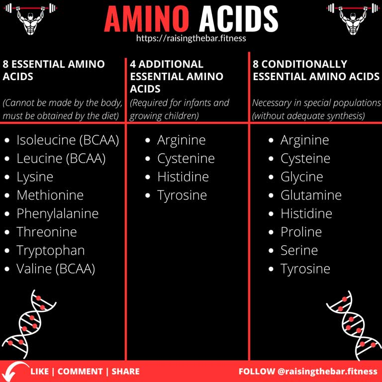 Fitness infographic depicting the different types of amino acids